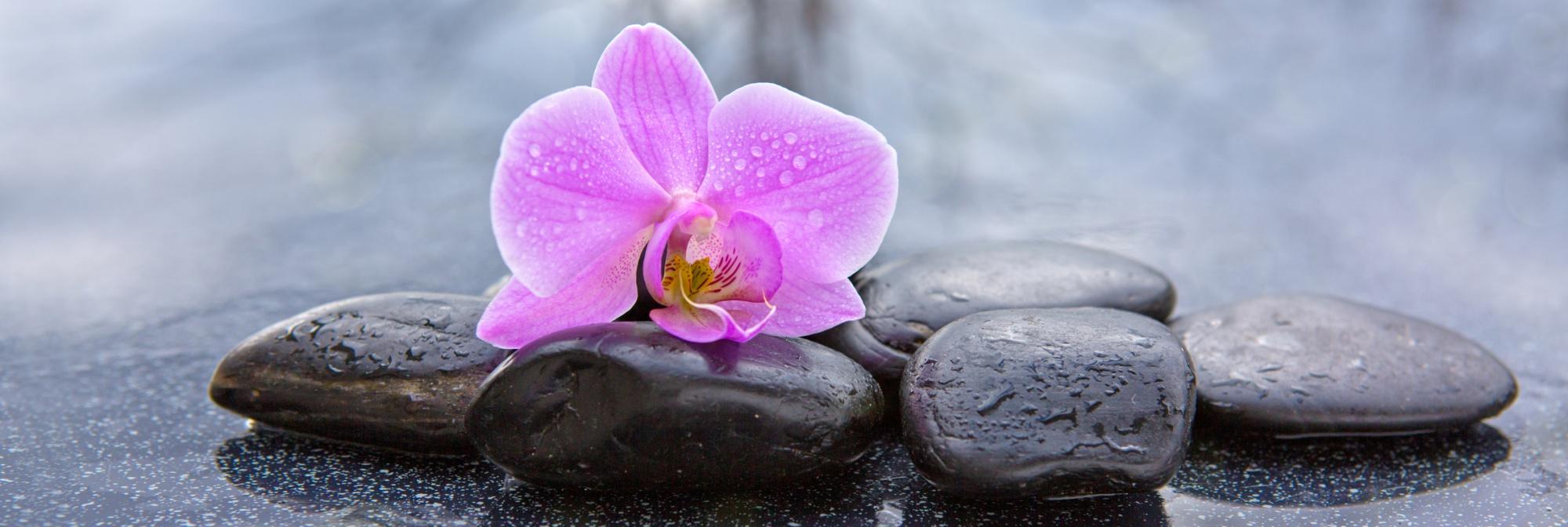 Orchidée et pierres © Fotolia